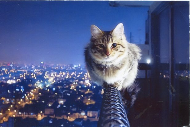 Russia - Cat on the railing