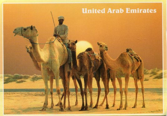 UAE - Camels in the Desert