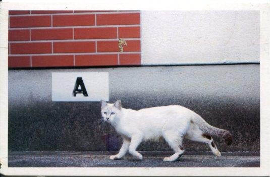 Korea - Cat on street