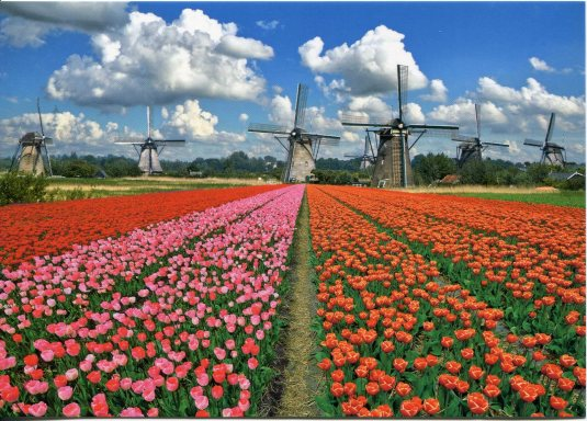 Netherlands - Tulips and Windmills