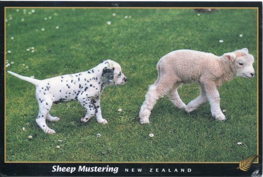 New Zealand - Dalmatian and Lamb