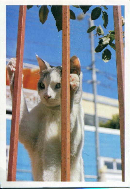 Russia - Cat at the Fence