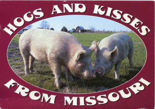 USA - Missouri - Hogsand Kisses