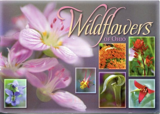 USA - Ohio - Wildflowers