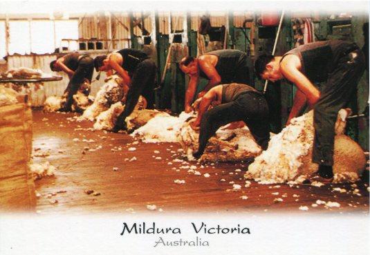 Australia - Shearing Sheds