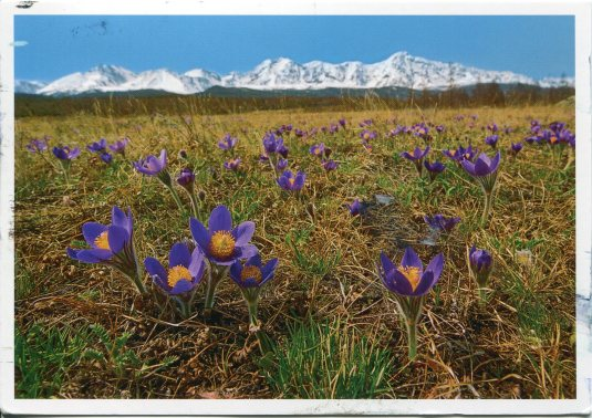 Russia - Altai Mountains Spring