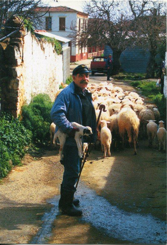 Cyprus - Shepherd and Sheep