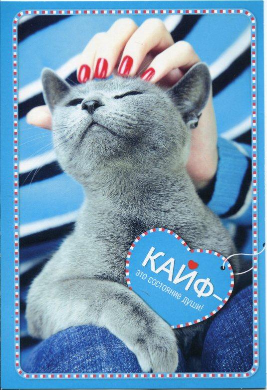 Russia - Grey Cat Pets