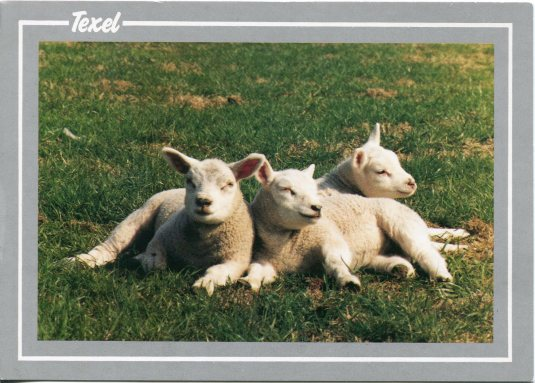 Switzerland - Lambs Sleeping