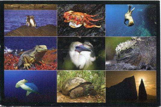 Ecuador - Galapagos multi