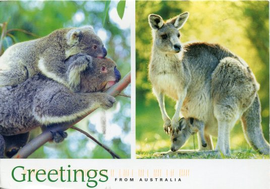 Australia - Koala and Kangaroo