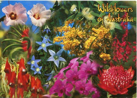 Australia - Wildflowers