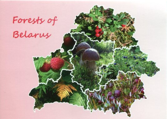 Belarus - Map Forests of