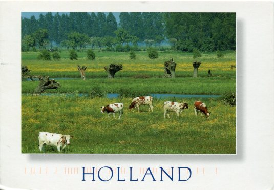 Netherlands - Cows in Pasture