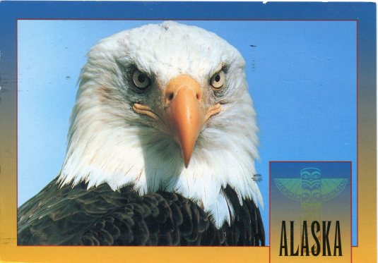 USA - Alaska - Bald Eagle