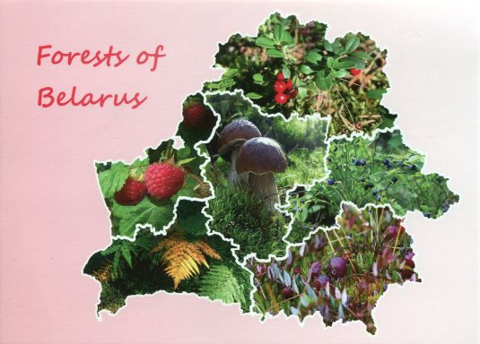 Belarus - Map Forests