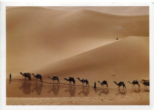 China - Camel Train