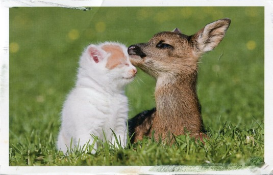 Germany - Kitten and Fawn