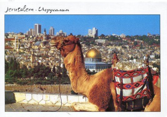 Israel - Jerusalem Camel