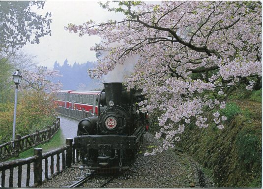 Taiwan - Train and Cherry Blossoms