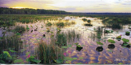Australia - Kakadu  NP Wetland