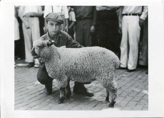USA - Iowa - Chand Champion Lamb