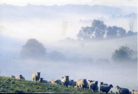 Netherlands - Sheep on a Hill
